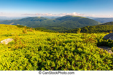grassy hillside in summer. forested mountain in the...