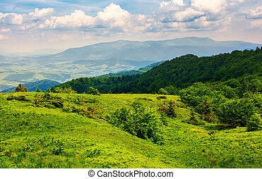 grassy hillside of Carpathian mountains. magnificent...