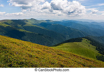 grassy hillside on mountain in summer - beautiful summer...