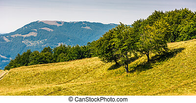 grassy hillside with trees on a bright day. beautiful summer...