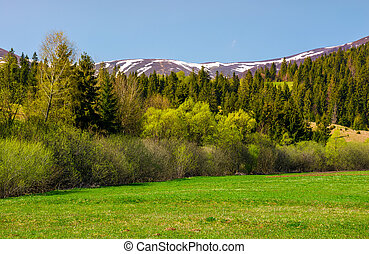 grassy meadow among the forest. lovely springtime nature in...
