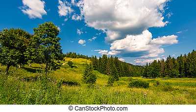 grassy meadow among the forested hills. beautiful summer...