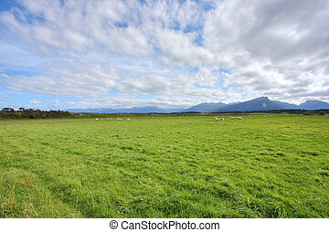 Grassy meadow background