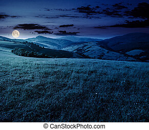 grassy meadow in mountains at night. beautiful summer...