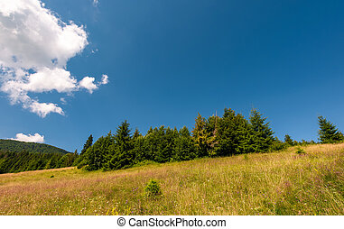 grassy meadow near the forest - grassy meadow with wild...