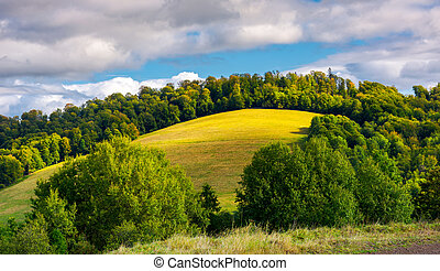 grassy meadow on a forested hill. lovely nature scenery...