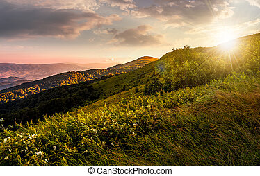 grassy meadow on a hillside at gorgeous reddish sunset....