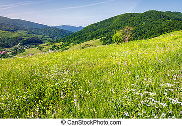 grassy meadow on a hillside. beautiful countryside with...