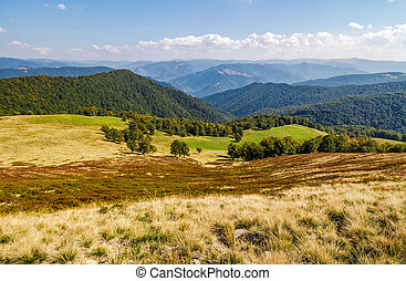 grassy meadow on a hillside in autumn - grassy meadow on a...