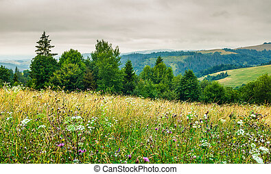 grassy meadow on forested hill. lovely nature scenery on an...