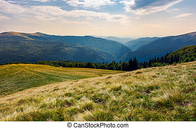 grassy meadow on forested hillside of Carpathians. lovely...