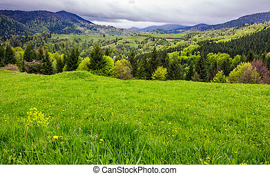 grassy meadow on forested hillside. beautiful nature scenery...