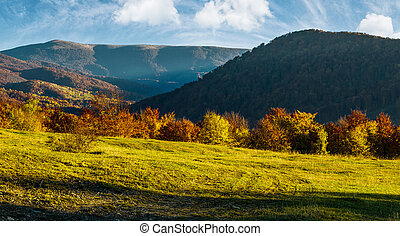 grassy meadow on hillside in autumn. beautiful mountainous...