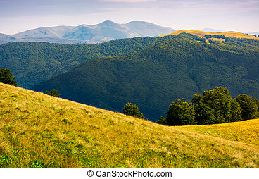 grassy meadow on hillside of Carpathians. beautiful summer...