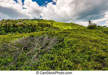 grassy meadow on hillside of mountain range - summer...