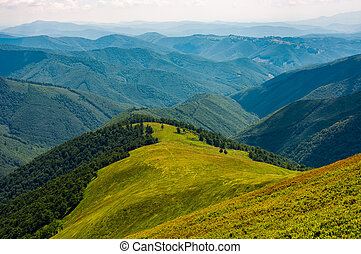 grassy meadow on mountain in summer - beautiful summer...