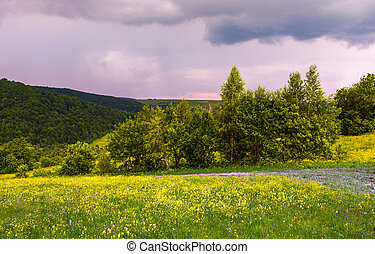 grassy meadow on the hillside. lovely nature scenery in...