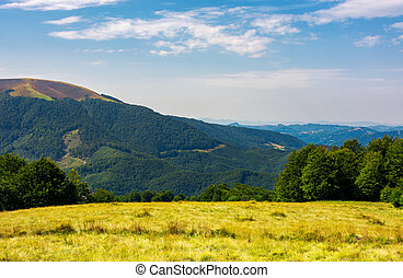 grassy meadow on top of a hill
