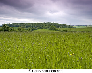 Grassy Meadow - Rural grassy meadow