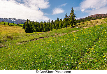 grassy meadow with flowers in mountains. beautiful...