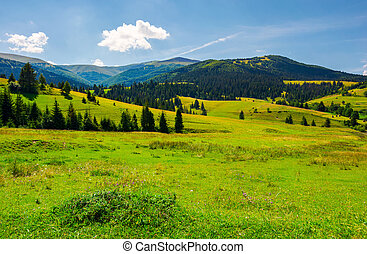 Grassy meadows of Borzhava valley. forested hill with...