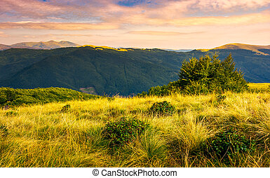 Grassy meadows of Svydovets ridge at sunset. beautiful...