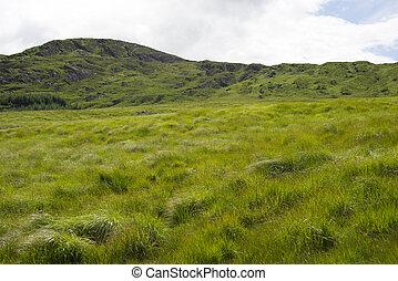 grassy mountain view