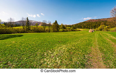 grassy pasture at the foot of the mountain - grassy pasture...