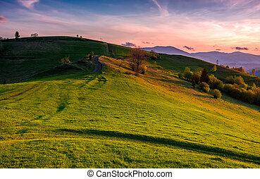grassy pasture on hillside at sunset