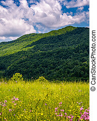 grassy pasture with wild flowers in mountains. beautiful...
