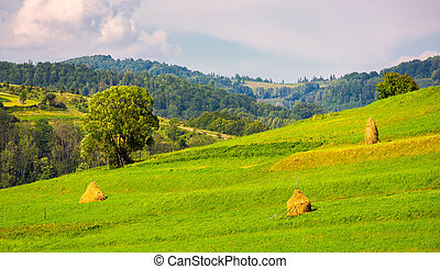 grassy rural field on hillside. few haystack and tree on a...
