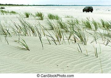 grassy sandy beach, grass in the sand