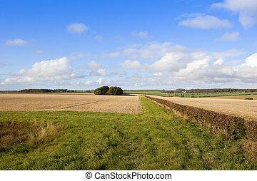 grassy scenic bridleway