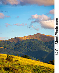 grassy slope in high mountains