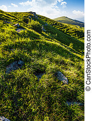 grassy slope of mountain in summertime. lovely nature...