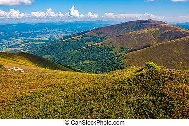grassy slopes of Carpathian mountain ridge. lovely natural...
