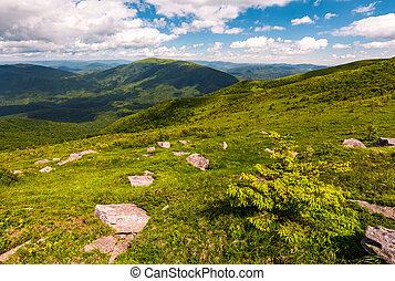 grassy slopes of Carpathian mountains. beautiful summer...