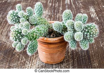 gratté, bois, cactus, fond