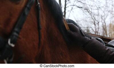 grattement, girl, cheval, elle, brosse