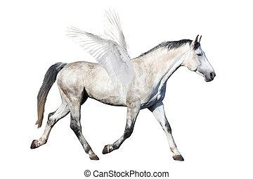graue , pferd, freigestellt, pegasus, weißes, traben