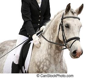 graue , pferd, freigestellt, porträt, weißes, sport