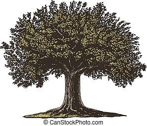 gravé, arbre