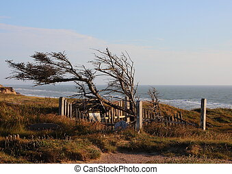 Grave at Edge of Cliff with Ocean Background