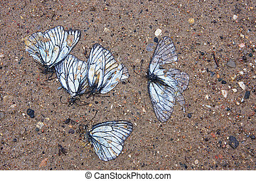 Grave of the butterflies