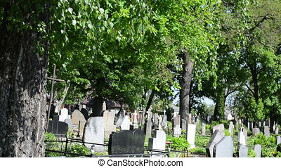grave tomb stone tree - Old birch trees grow in rural...