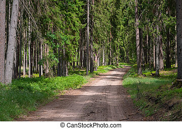 Gravel and sand road in the pine forest. Diminishing perspective of the path in the woods. Walking or driving through the trees on the forrest road with green grass on the sides