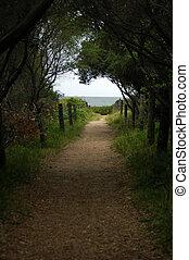 footpath to ocean