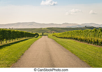 gravel road across autumn vineyard in New Zealand