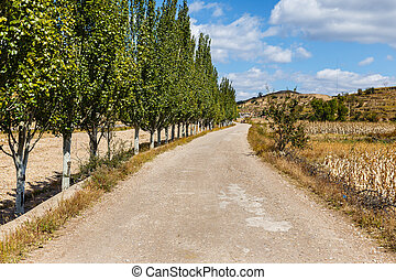 gravel road along a corn field with trees along the road