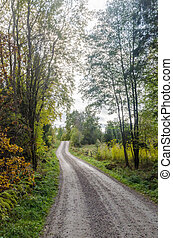 Gravel road in a deciduous forest by fall season